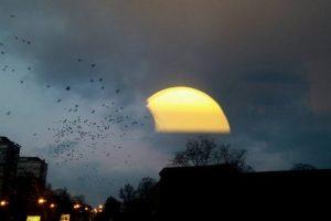 Ana Zoric |Birds
