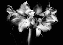 Il Giardino / The Garden | Ksenija Spanec