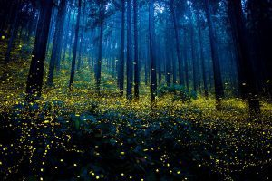 Amazing Photos Of Fireflies From Japan