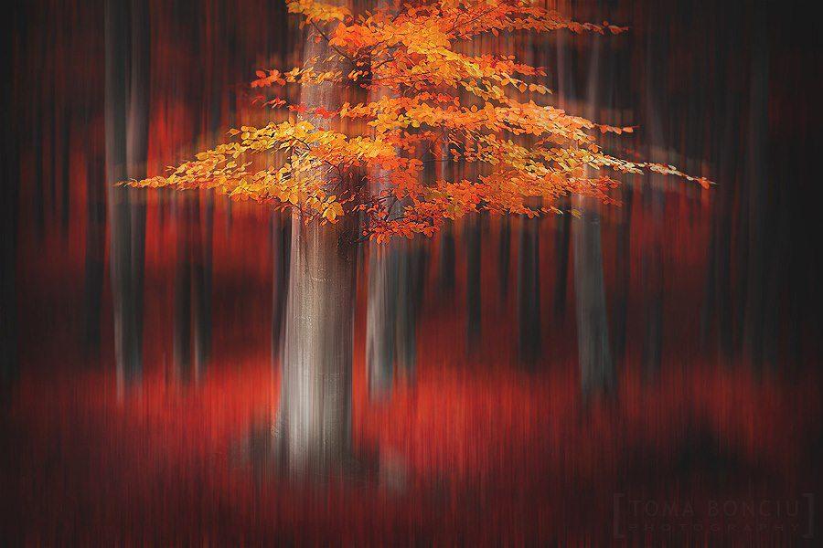 Surreal landscapes | Toma Bonciu - Photographer #artpeople