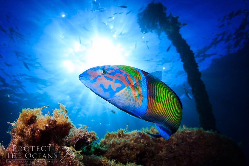 Incredible Underwater Images in the Mediterranean Sea by Jordi Benitez Castells
