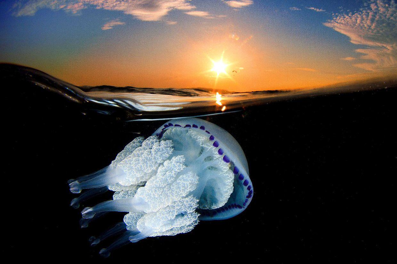 Jellyfish by Jordi Benitez Castells