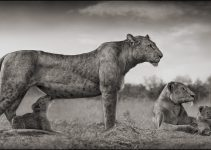 A SHADOW FALLS | NICK BRANDT