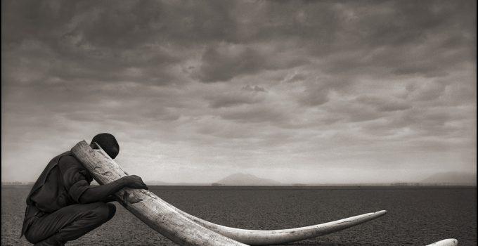 ACROSS THE RAVAGED LAND | NICK BRANDT #artpeople