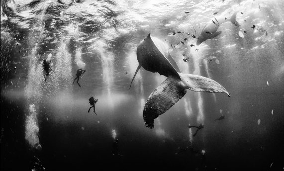 Anuar Patjane , Underwater Photography #artpeople