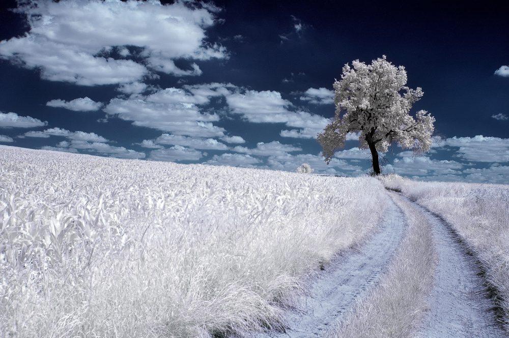 Infrared Trees Photography by Przemysław Kruk