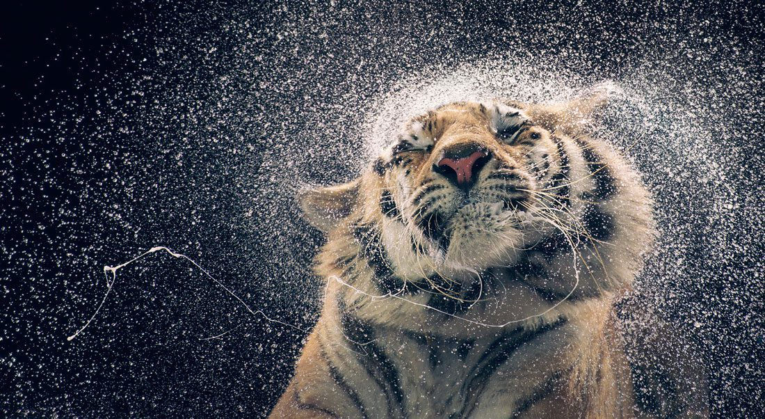 Tim Flach | WildLife Photographer