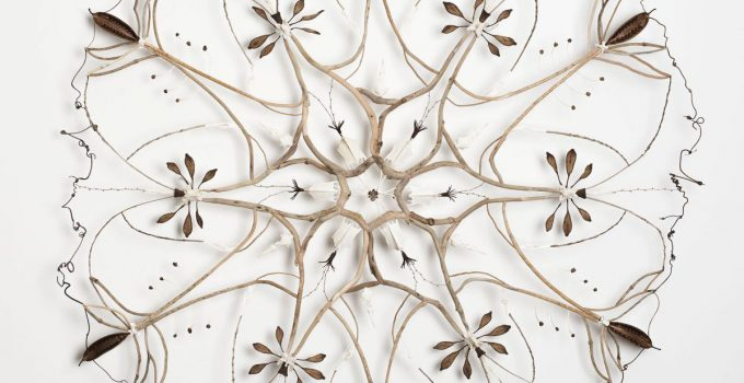 Sculptural assemblages Built From Found Organic Specimens by Shona Wilson